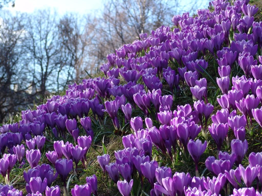 Xiv весенний фестиваль цветов в